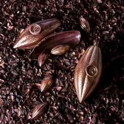 Mazorca de Cacao Con Bombones y Nibs de Cacao Mismo Origen